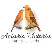 Aviario Victoria, Canarios Lizard y Lancashire. Jilguero Mayor, Camachuelo Siberiano y Pardillo Sicerin Cabaret.